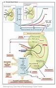 Pathogenesis of syndro...