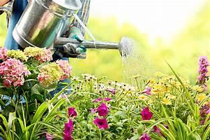 Blumen Im Garten : bildquelle sofiaworld ~ Bigdaddyawards.com Haus und Dekorationen