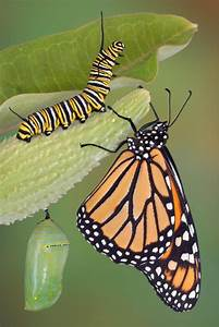 Can Moths Or Butterflies Remember What They Learned As