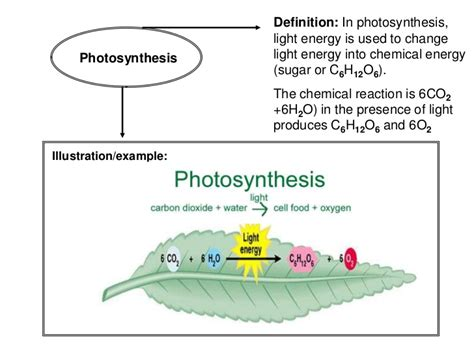 light energy definition vocabulary book photosynthesis