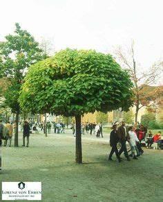 Catalpa Bignonioides Nana : catalpa bignonioides 39 aurea 39 garden trees pinterest ~ Michelbontemps.com Haus und Dekorationen