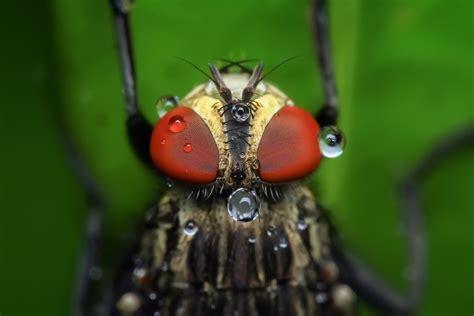 macro bug portraits  ronny overhate    happy