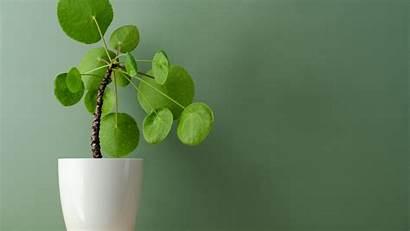Indoor Plant 4k Houseplant Foliage Desktop Uhd