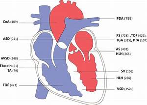 Genetics of Congenital Heart Disease | Circulation Research