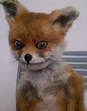 Taxidermy Fox Meme - meet stoned fox the badly stuffed creature reborn as a russian internet celebrity daily mail