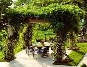 Plantes Grimpantes Pot Pour Terrasse : plante grimpante ombre pour pergola de jardin ~ Premium-room.com Idées de Décoration