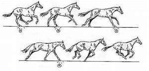 Understanding Your Horse U0026 39 S Gait  Part 2