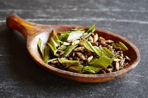 manger des insectes et les cuisiner nos recettes d 39 insectes