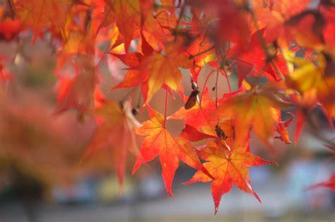 autumn leaves in south korea retireediary