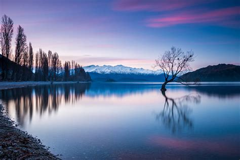 wanaka tree  sunset  lonely willow tree
