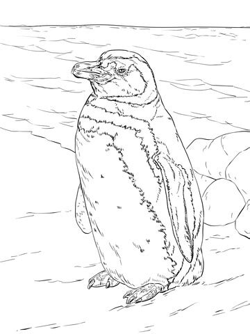 realistic magellanic penguin coloring page