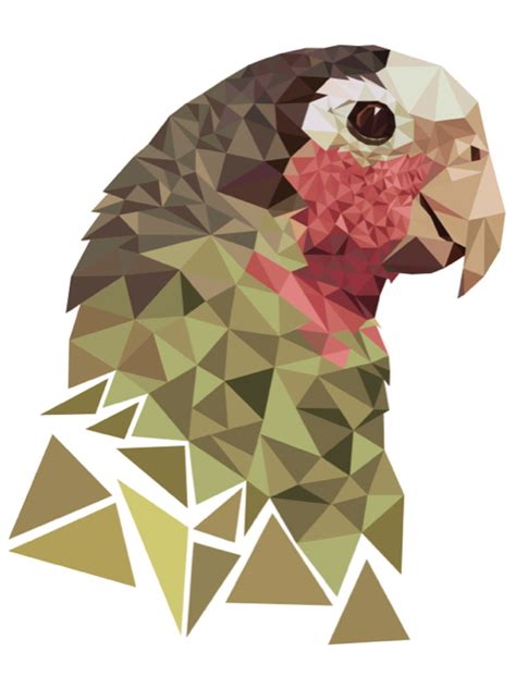 parrot graphic design assignment  triangles