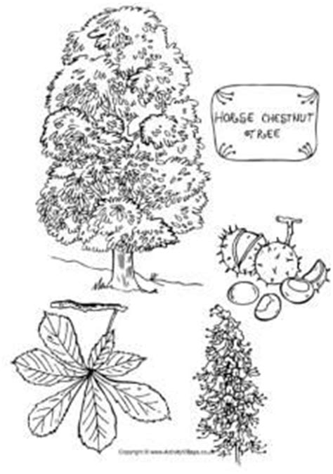 sycamore tree preschool sycamore tree colouring page education home schooling 441