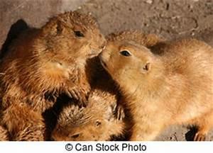 Prairie dog group hug Stock Photo Images. 1 Prairie dog ...