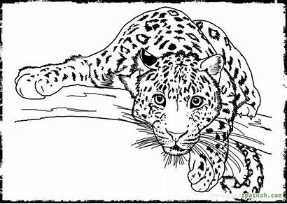 Realistic Coloring Animal Pages Wild Awesome Animals