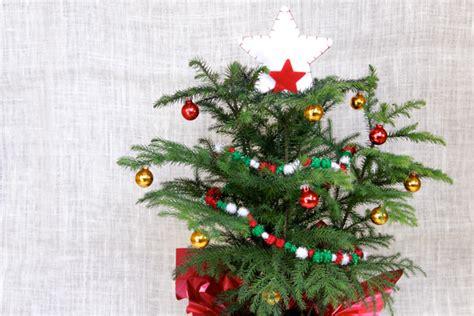 mini christmas tree live o mini tree