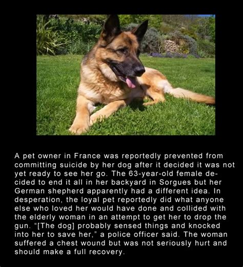 loyal dog stories ive  heard     tears