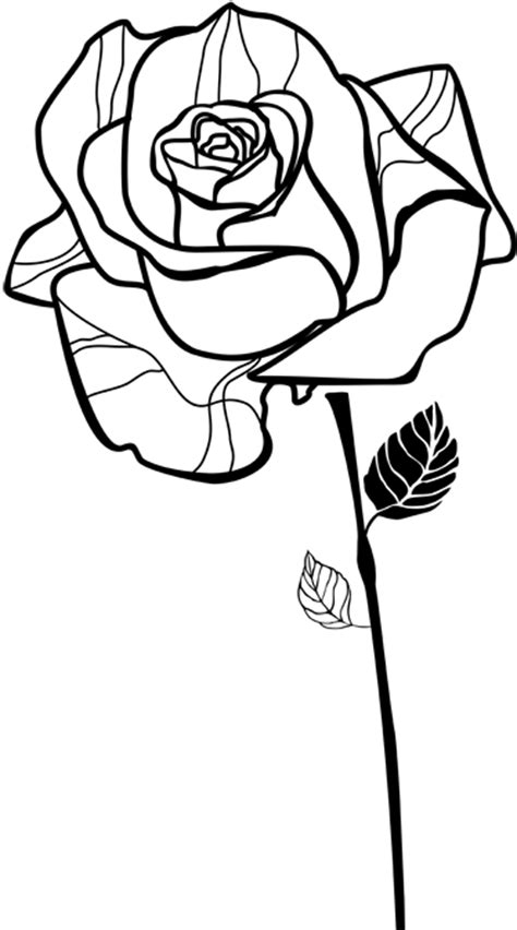 Sticker rose dessin - TenStickers