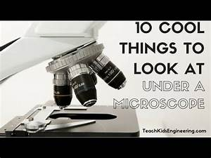 10 Cool Things to View Under a Microscope - YouTube