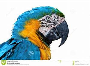 Parrot, Blue-and-yellow Macaw Royalty Free Stock ...