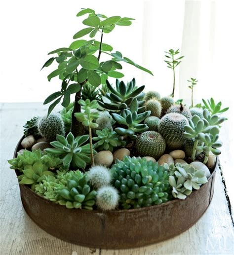 cactus and succulent container gardens 70 indoor and outdoor succulent garden ideas shelterness