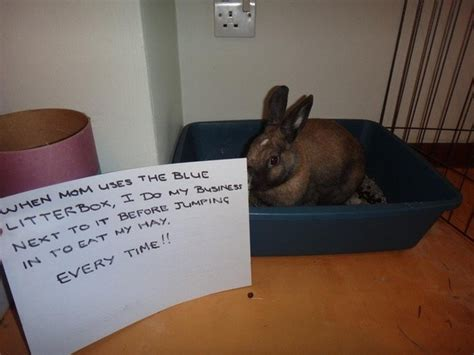 bunny shaming     guilty rabbits