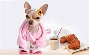 Hotel Pour Chien : l h tellerie canine une branche surprenante mais ~ Nature-et-papiers.com Idées de Décoration
