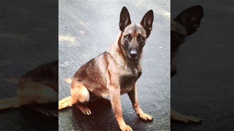hampshire police dog bites man man bites dog man