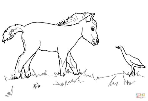 Kleurplaat Horses by Miniature Foal And Bird Coloring Page Free