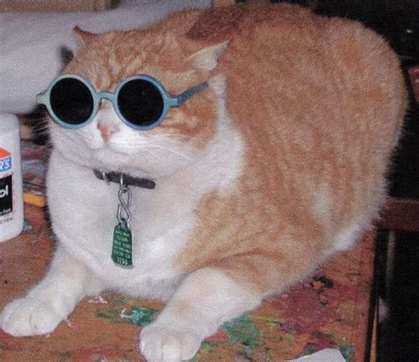 cats wearing specs images  pinterest animals
