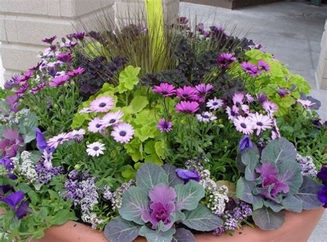container plants for sun ideas home inspirations