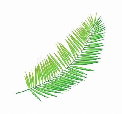 Palm Areca Leaf Houseplant Exotic Tropical Decorative