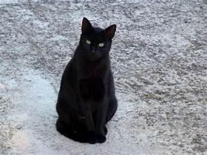 Malzpaste Für Katzen : kolloidales silber f r katzen youtube ~ Orissabook.com Haus und Dekorationen