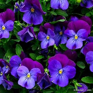 Beautiful Blue Flowers Picture Collections   Ginva