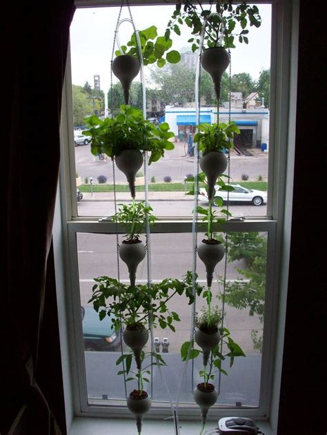 Window Sill Hydroponics by 21 Best Office Window Food Garden Hydroponics Images On