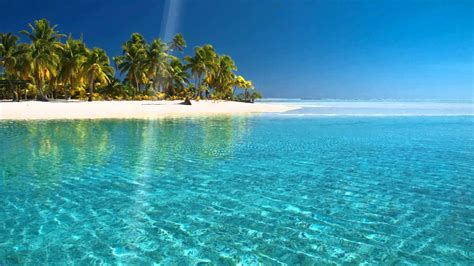 Animated Tropical Wallpaper - wallpapers and screensavers 63 images