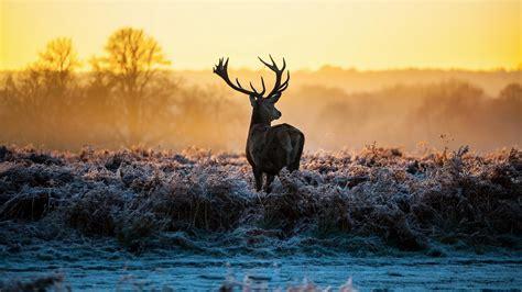 Deer Hunting Desktop Wallpaper Deer Hunting Backgrounds