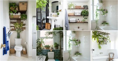 bathroom plant decor ideas  tips  choosing