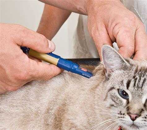 faqs zur insulinbehandlung bei der katze