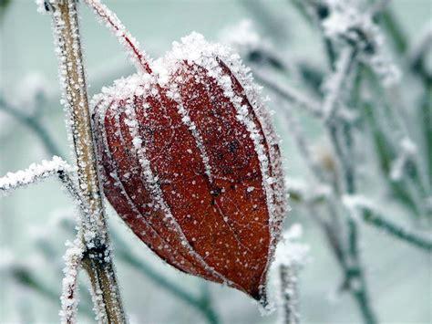 stauden die im winter blühen stauden im winter nicht alle schneiden mein sch 246 ner garten
