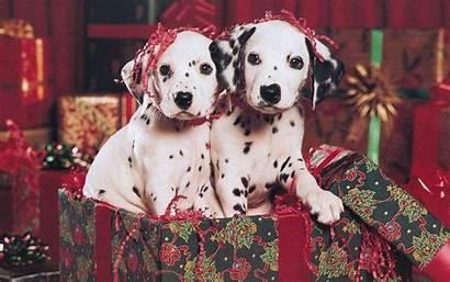 Christmas Puppy Wallpapers Computer Puppies Desktop Background