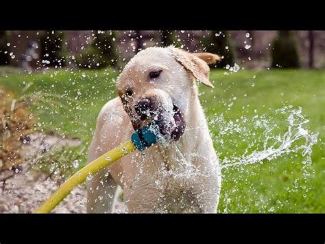 Funny Dogs Playing With Water Compilation ? 1Funny.com