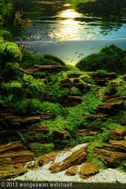 Aga Aquascape by 2013 Aga Aquascaping Contest Entry 170 Aquascapes