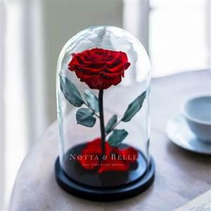 Rose Eternelle Sous Cloche : notta belle plus de 200 vari t s de roses ternelles ~ Farleysfitness.com Idées de Décoration