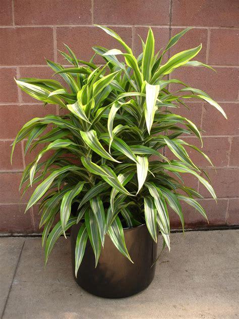 Interior Landscaping  Plant Rental  Foliage Plants