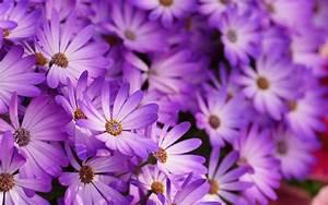 purple flower pattern wallpaper 396   Hd Wallpaper, Blue ...