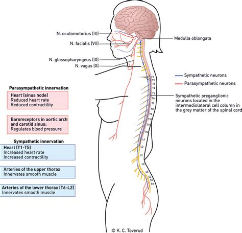 cardiovascular complications  spinal cord injury
