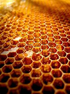 1000+ images about Beehive on Pinterest   Nests, Vineyard ...  Honeycomb