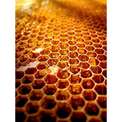 Honeycombs Build Themselves? Physics Not Bees May
