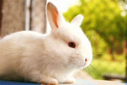 Rabbit Bunny Animal Animals Pc Wallpapers Mobile